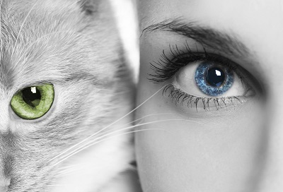 image of the eyes of a cat and a lady