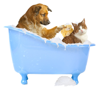 image of a dog bathing a cat
