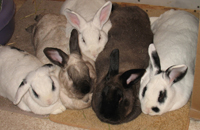 photo of four bunnies and their aunt